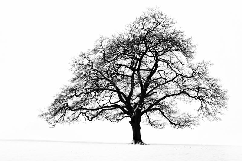 Lone Tree in the Snow. A lone tree in a snow covered field stock image