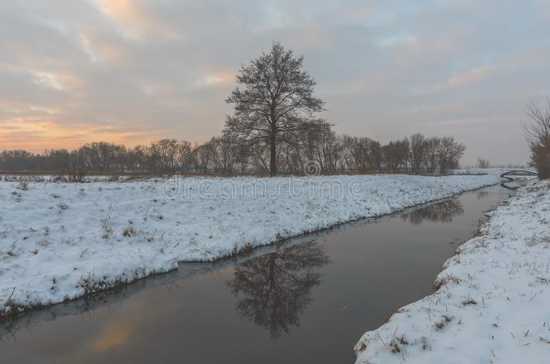 Lone tree in a snow-covered field and a creek cutting across. A tree in the snow-covered field standing on a bank of a creek royalty free stock photography