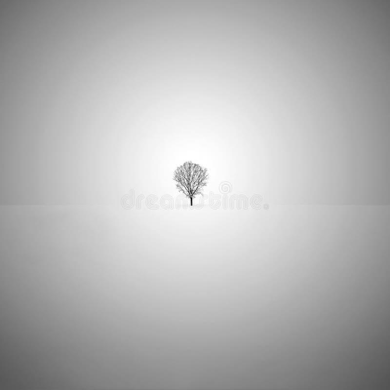 Lone tree in the snow. Minimalist fine art black and white photo with a lone tree in the snow royalty free stock photography
