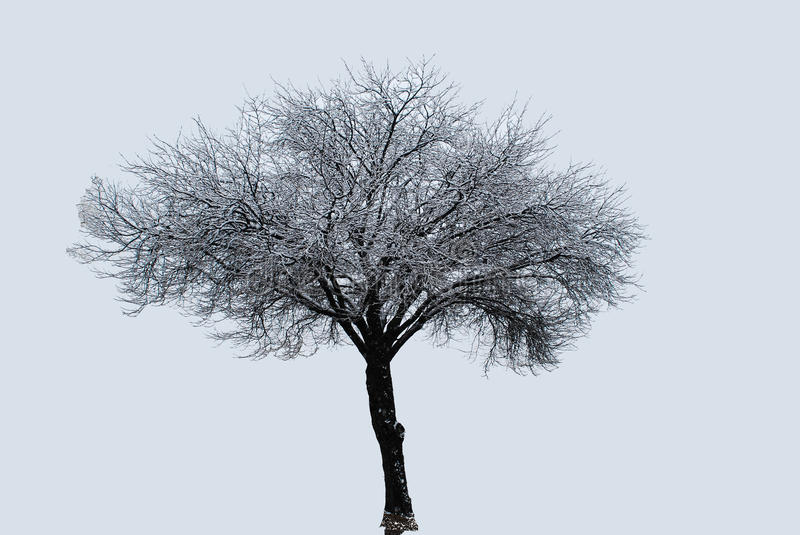 Lone Tree in a Snow Storm. A lone tree stands in the freezing cold of a snowy setting stock images