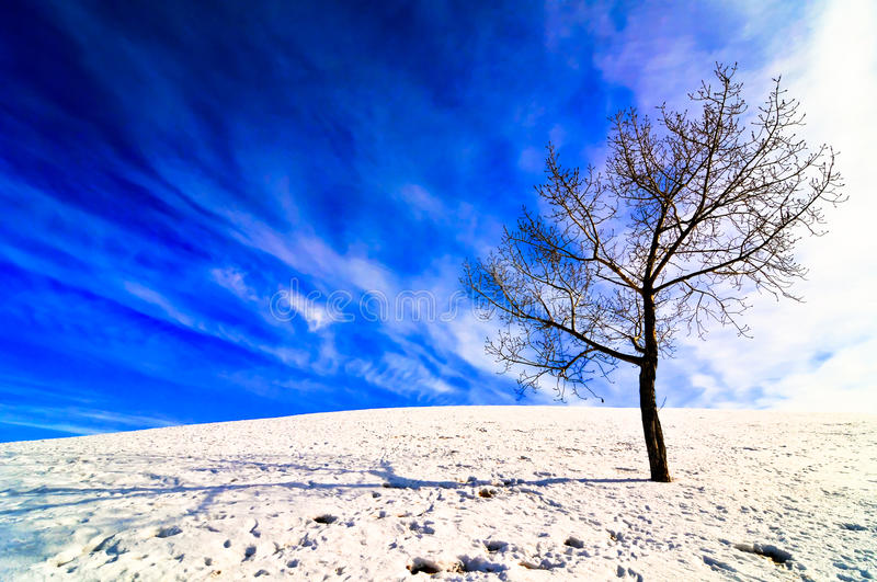 Lone tree on snowy field. Lone tree on a snowy field with bright sun creating a shadow and bright blue sky with clouds behind royalty free stock images