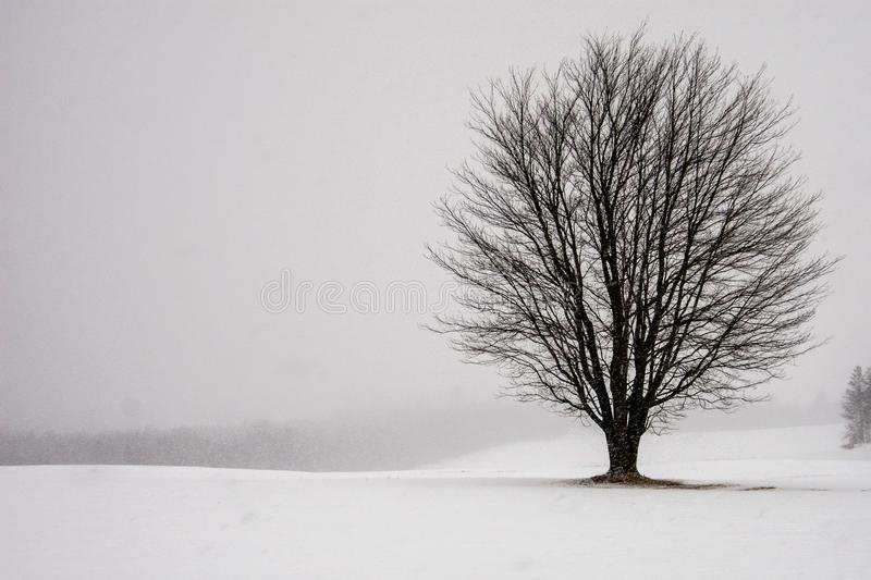 Lone tree in a snowy field. Sunday drive on a snowy day this lone tree in the field stock photo