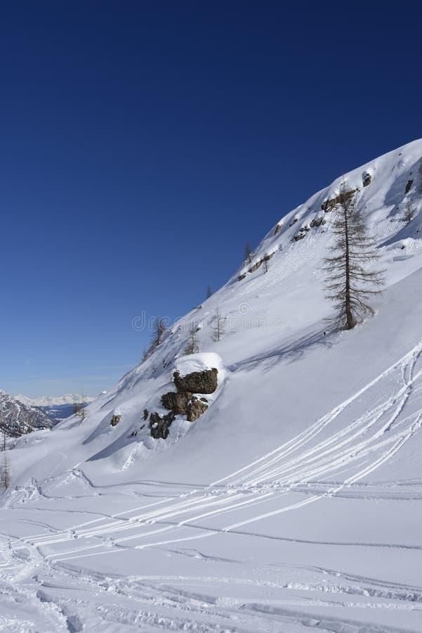 Lone tree on snowy slope Arabba royalty free stock photo