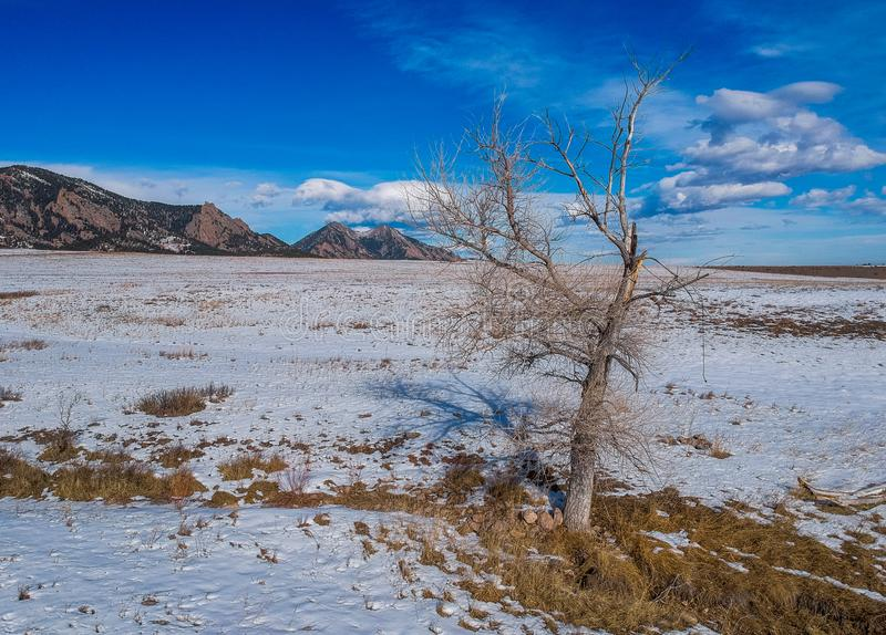 Lone tree in snowy winter field. A lone tree growing in a large open field of snow shot near the Rocky Mountains in Colorado stock photography