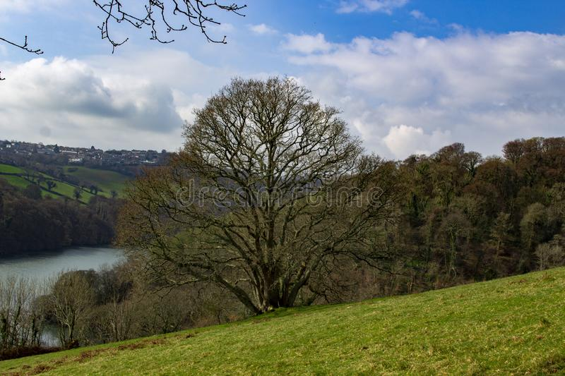 A lone tree in spring on the banks of the River Dart. Near Dartmouth Devon stock image