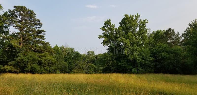 Lone tree in a sunlit meadow - North Georgia - McDaniel Farm in Duluth royalty-vrije stock afbeeldingen