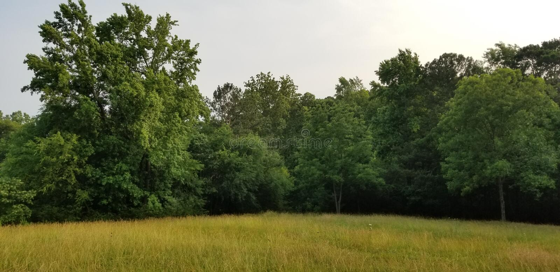 Lone tree in a sunlit meadow - North Georgia - McDaniel Farm in Duluth stock afbeeldingen