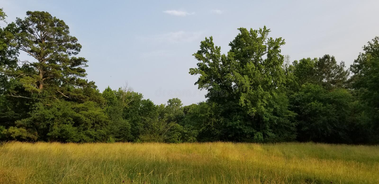 Lone tree in a sunlit meadow - North Georgia - McDaniel Farm in Duluth royalty free stock images