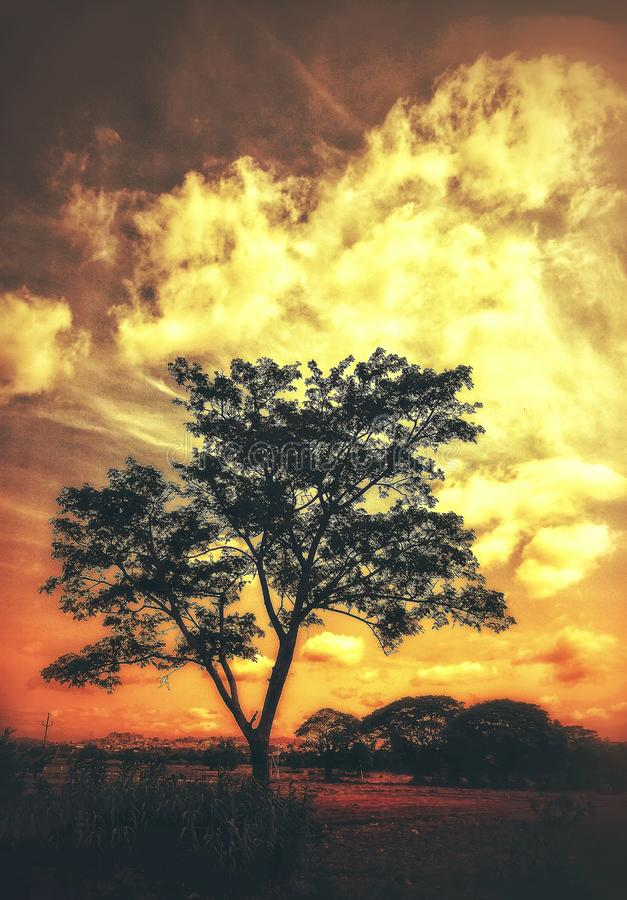 A lone tree with a sunset sky background stock images