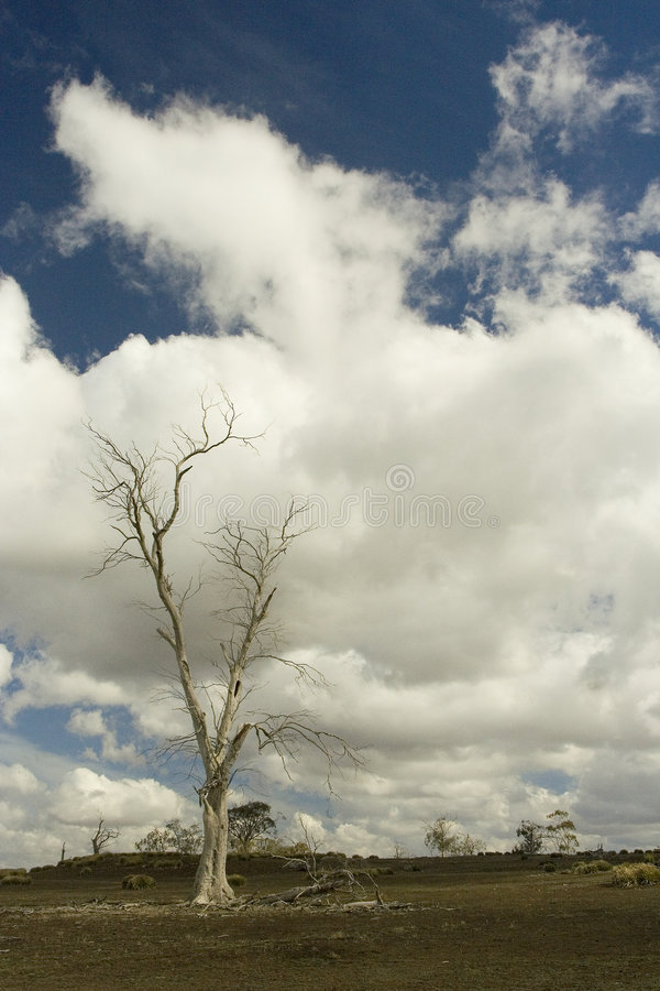 Lone tree under cloudy sky. Lone tree standing in field under cloudy sky stock photos