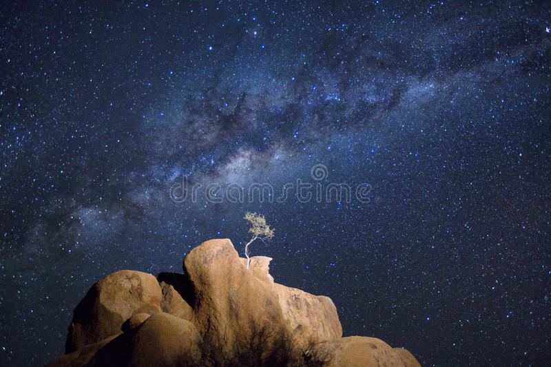 A lone tree. stock image