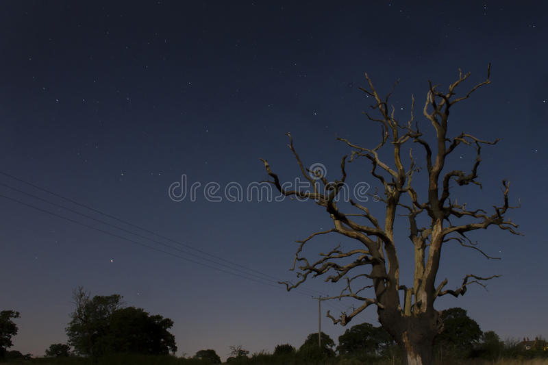 Lone Tree Under Starry Night Sky stock images