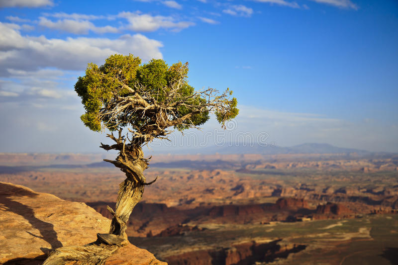 A lone tree watching a beautiful view in Utah, USA. stock photography