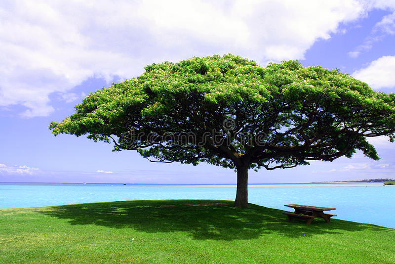 The Lone Tree stock images