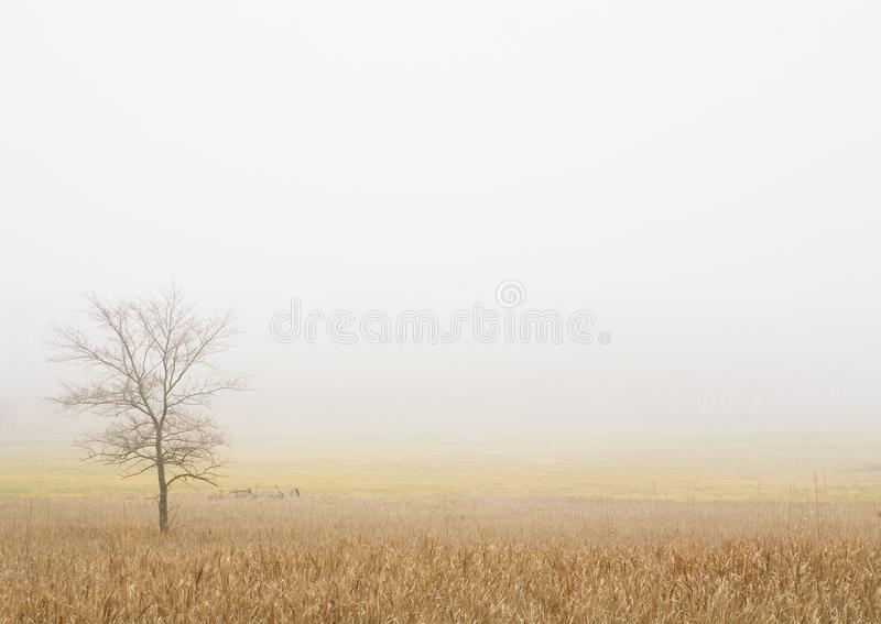 Lone Tree In A Wheat Field Royalty Free Stock Photo