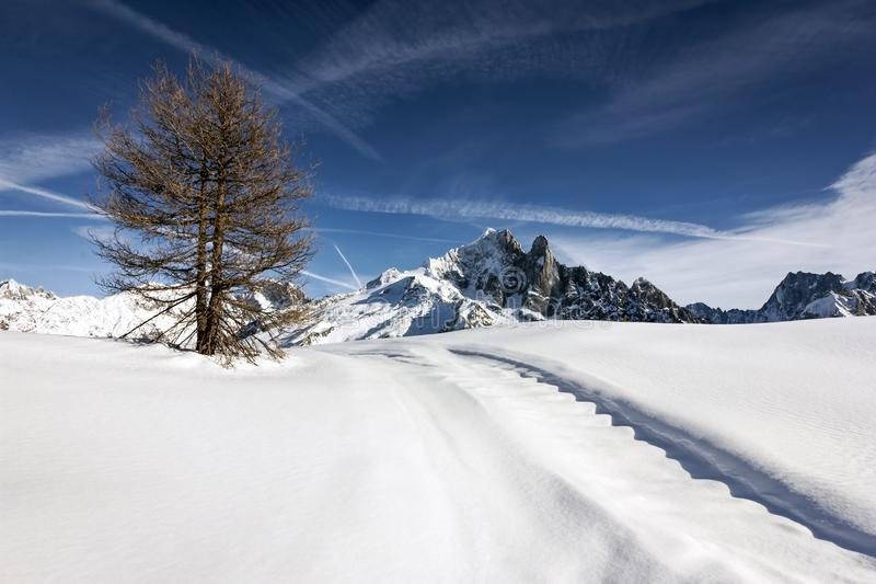 Lone tree on white snow covered hill. With a rocky mountain at the background royalty free stock photography