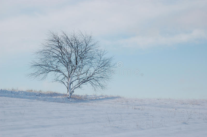 Lone tree in winter royalty free stock image