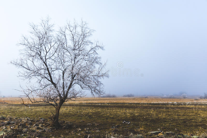 Lone Tree in Winter Landscape. Tree with no leaves in foggy winter landscape. Shoshone, Idaho, USA royalty free stock photography