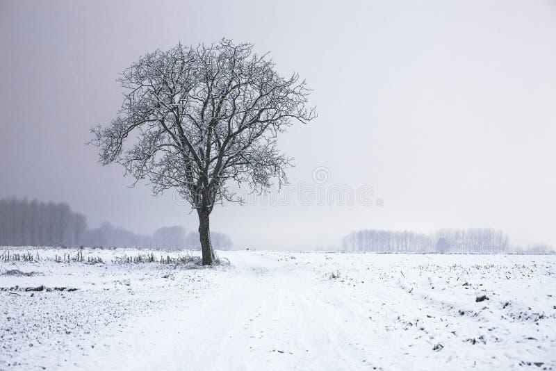 Lone tree in winter landscape stock image