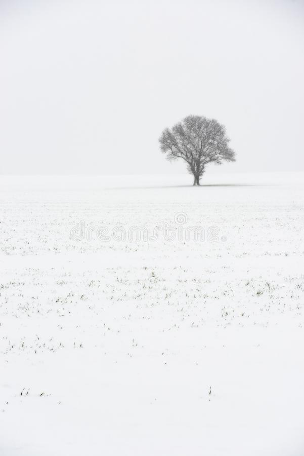 Lone Tree In Winter. In England, UK with spikes of grass in the foreground royalty free stock photos