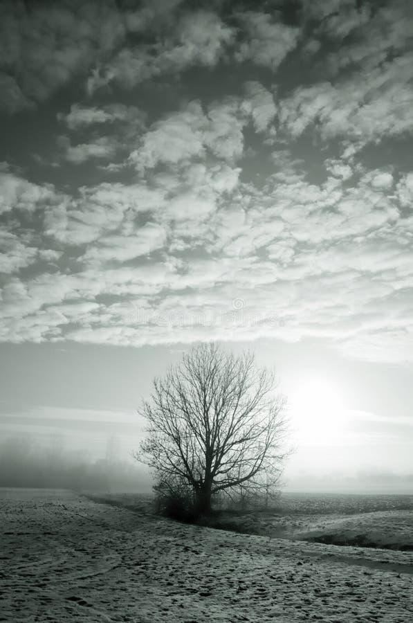 Lone tree in Wintry landscape stock image