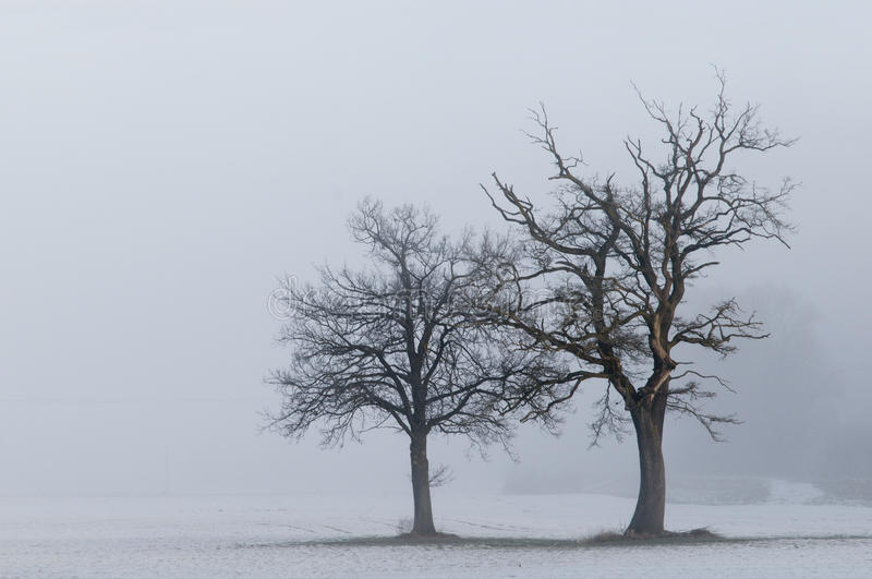 Download Lone trees landscape stock image. Image of trees, scene - 17839931