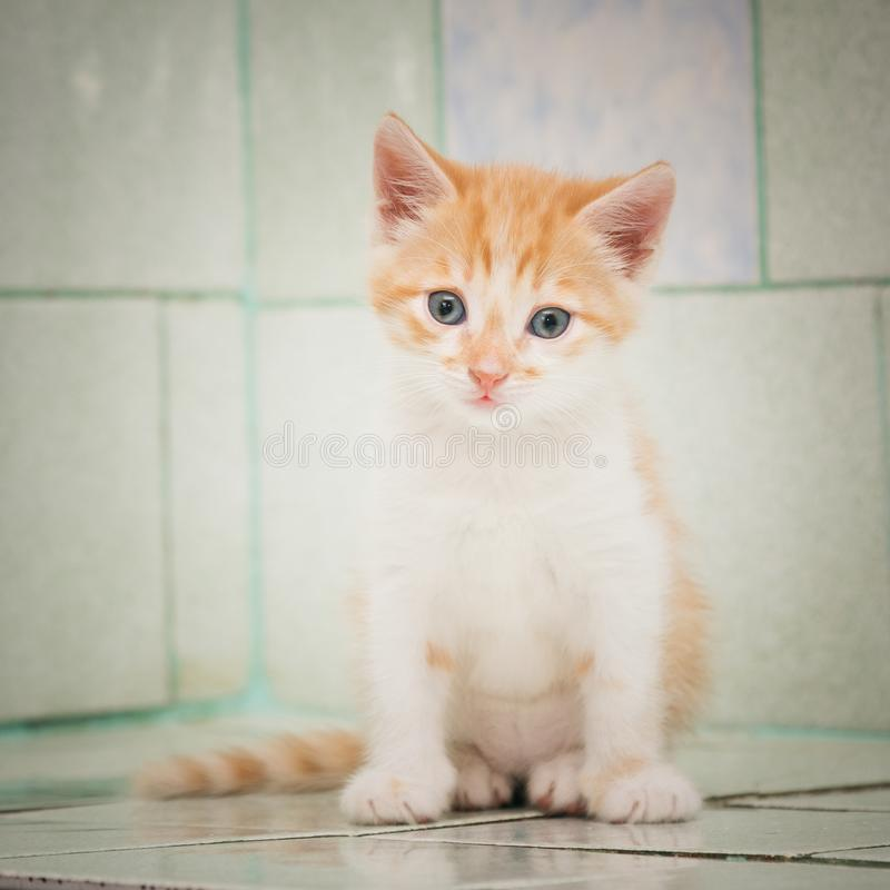 A lone wandering kitten sits on a tile in a vet hospital. stock photos