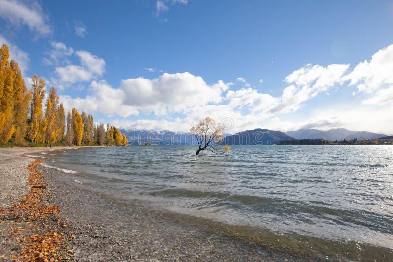Lone willow tree at lake wanaka new zealand stock image