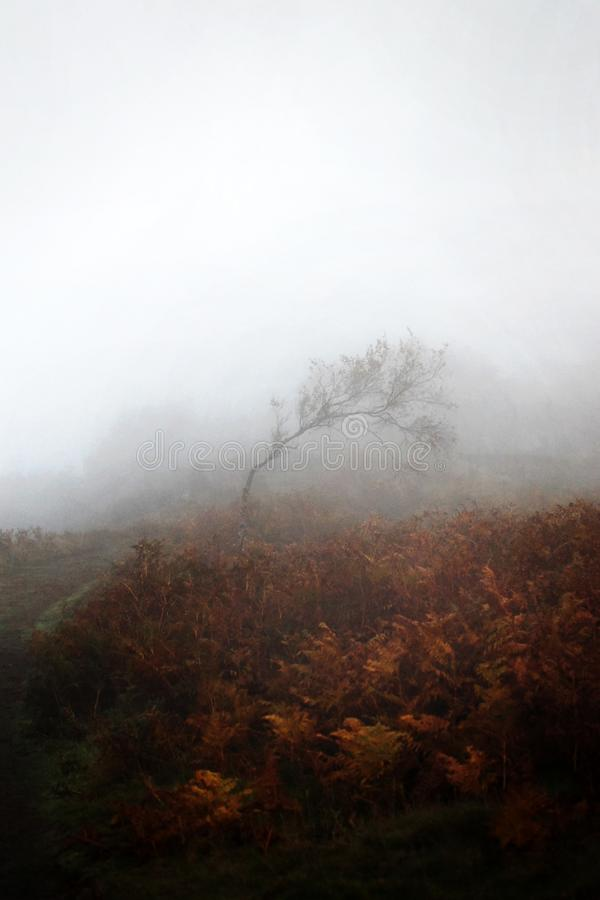Lone windswept tree in fog with brown ferns royalty free stock image