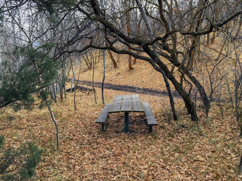Lone wooden Picnic Table in late Fall panorama forest through trees on the Yellow Fork and Rose Canyon Trails in Oquirrh Mountains. On the Wasatch Front in Salt royalty free stock photography