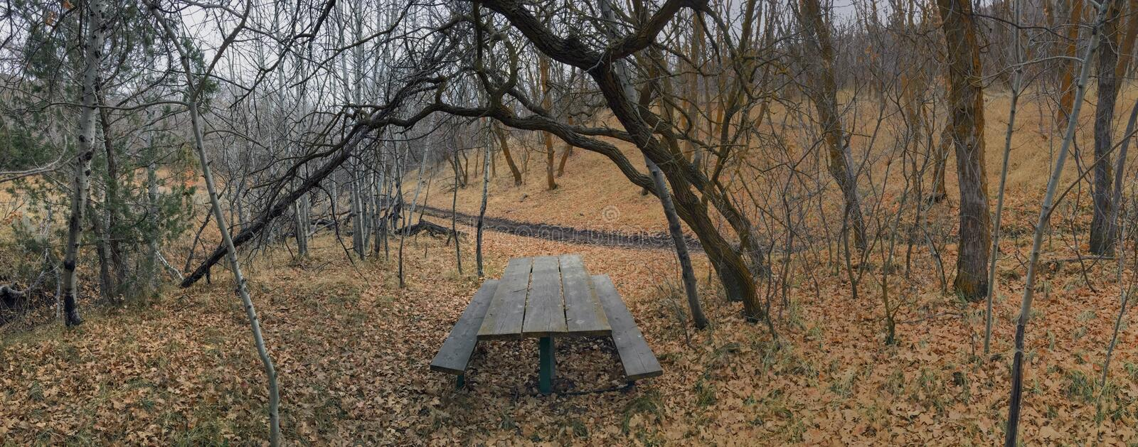 Lone wooden Picnic Table in late Fall panorama forest through trees on the Yellow Fork and Rose Canyon Trails in Oquirrh Mountains. On the Wasatch Front in Salt royalty free stock images