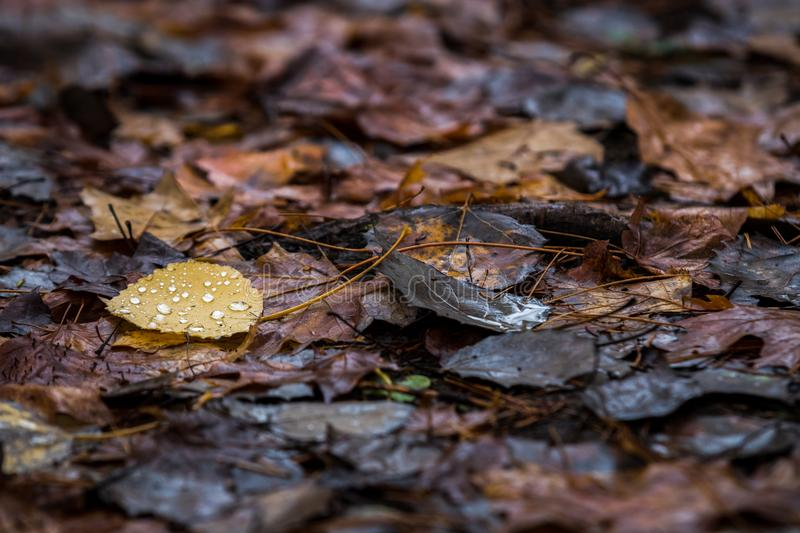 Yellow leaf on forest floor royalty free stock image