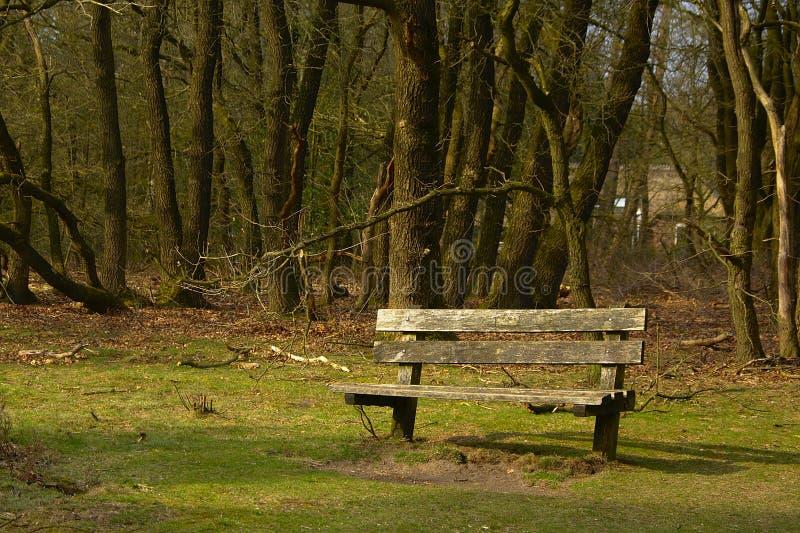 Loneley ławka na lasowej krawędzi fotografia royalty free