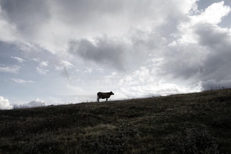 Loneliness, hope and freedom royalty free stock photo