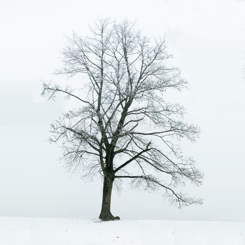 Loneliness and sadness concept. Lonely tree in winter as a symbol of loneliness, sadness and depression stock photos