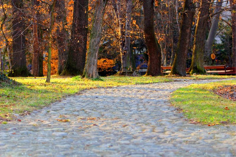 Download Lonely alley stock photo. Image of sunlight, botanical - 24048876