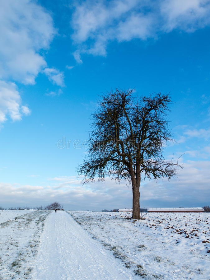 Lonely apple tree in the snow stock photography