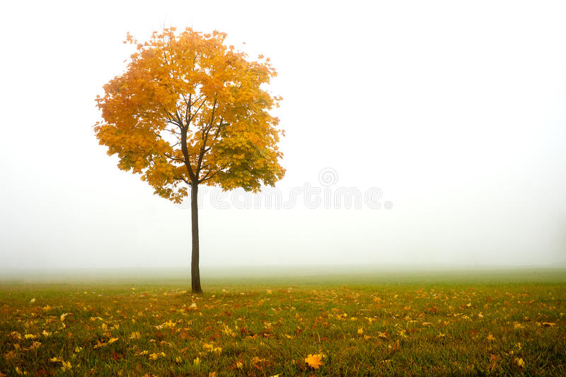 Download Lonely autumn tree stock photo. Image of fall, morning - 26341992