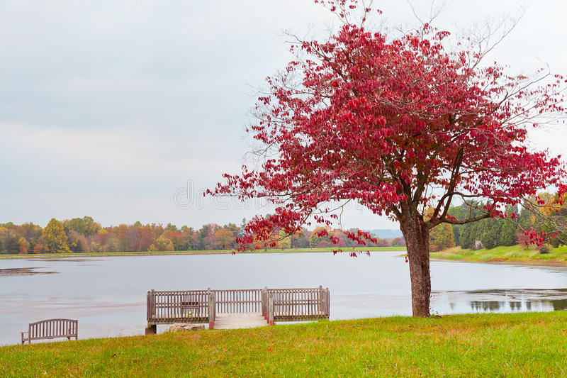 Lonely autumn tree near lake on overcast day. stock photo