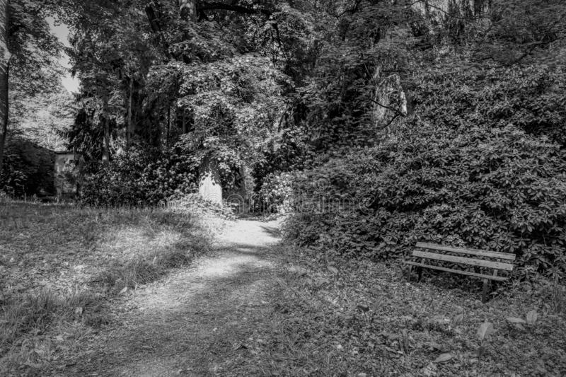 Lonely bank in the rhododendron park. Black and white scence lonely bank in the rhododendron park royalty free stock photos