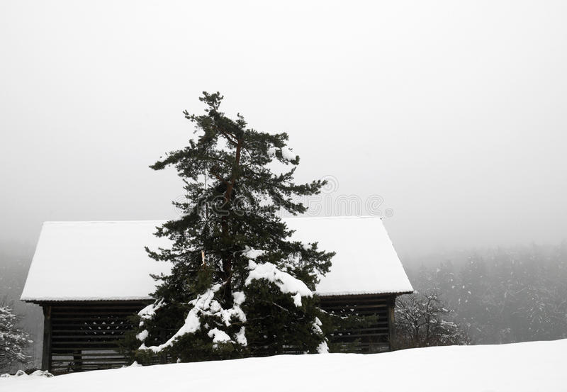 Lonely barn covered with snow royalty free stock image