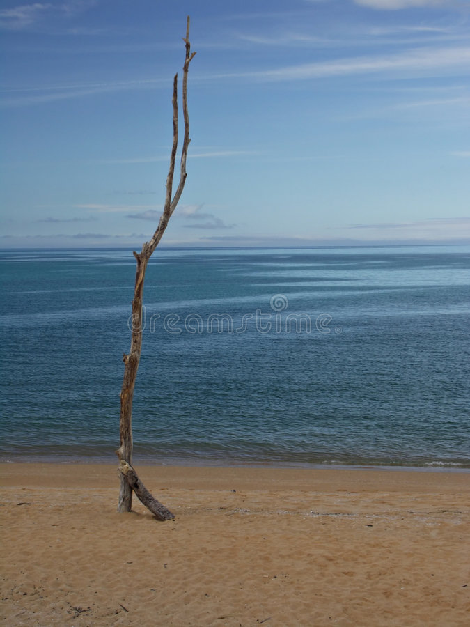 Lonely Beach royalty free stock photo
