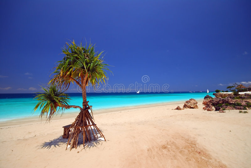 Lonely beach plant. A lonely plant on the beach, Zanzibar Africa royalty free stock image