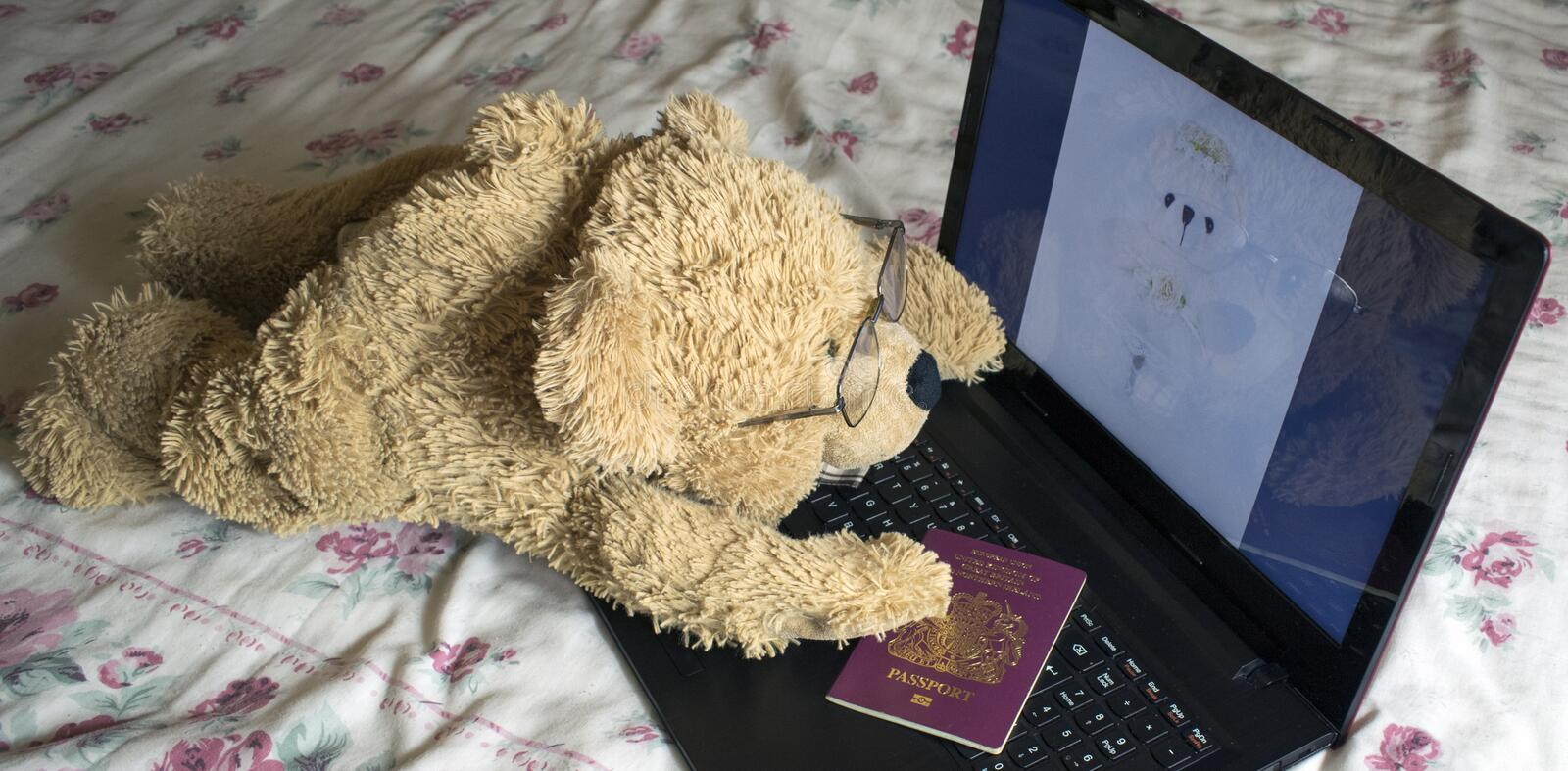 Lonely Bear Looking For Love On The Internet. Long Distance Relationship royalty free stock photo