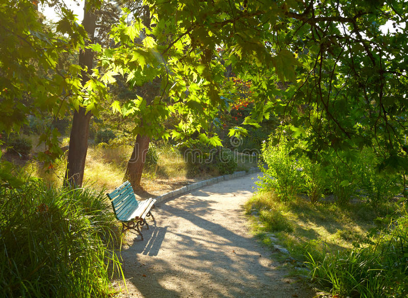 Download Lonely bench stock image. Image of branch, summer, forest - 16156157