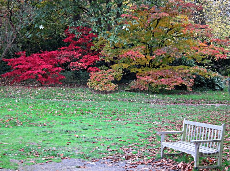 Lonely Bench at the Park. Lonely Wood White Bench in a Wimbledon Park in Autumn, at the end of the day stock photo