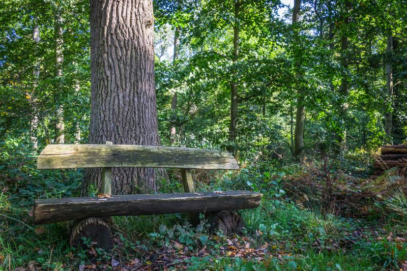 Lonely bench in the wood royalty free stock photo