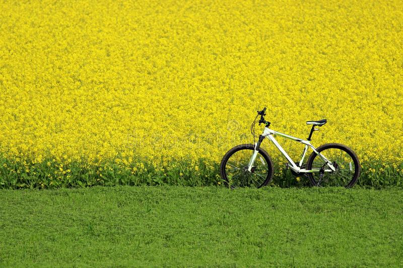 Lonely Bicycle stock image