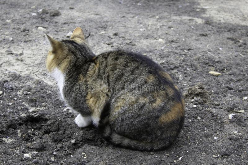 A lonely big and striped cat sits on the ground and looks off into the distance watching something.  royalty free stock photos