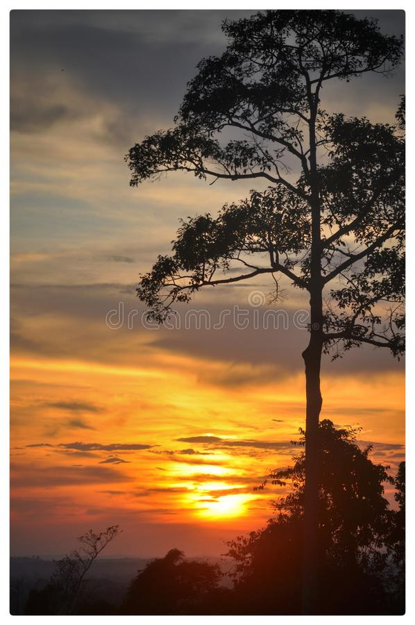 Lonely big tree and sunset 1. Lonely big tree and sunset in Chanthaburi, Thailand royalty free stock images